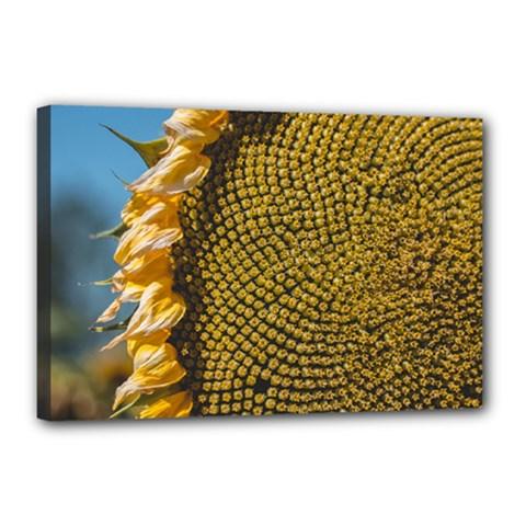 Sunflower Bright Close Up Color Disk Florets Canvas 18  X 12
