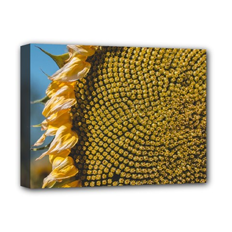 Sunflower Bright Close Up Color Disk Florets Deluxe Canvas 16  X 12