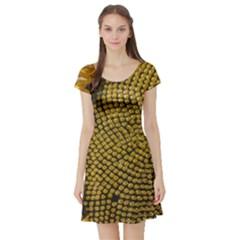 Sunflower Bright Close Up Color Disk Florets Short Sleeve Skater Dress