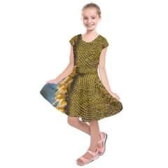 Sunflower Bright Close Up Color Disk Florets Kids  Short Sleeve Dress