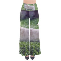 Chihuahua Full Pants