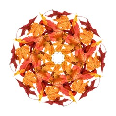 Autumn Leaves Leaf Transparent Folding Umbrellas