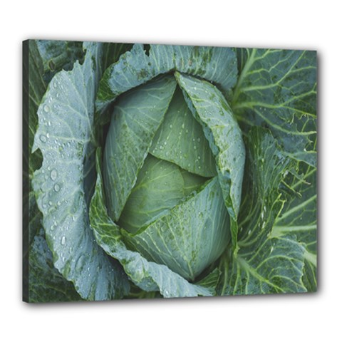 Bright Cabbage Color Dew Flora Canvas 24  x 20