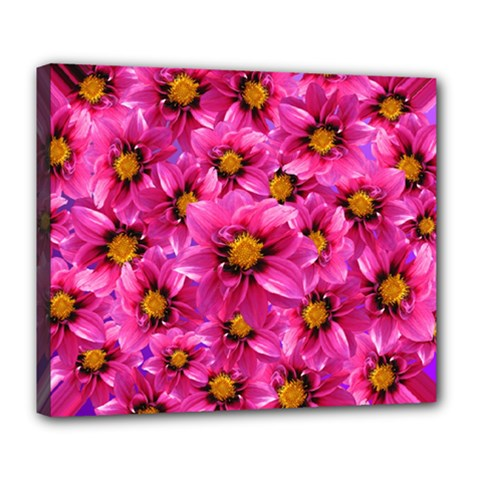 Dahlia Flowers Pink Garden Plant Deluxe Canvas 24  x 20