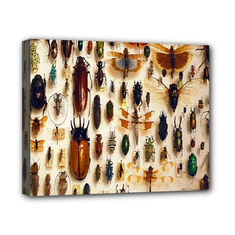 Insect Collection Canvas 10  x 8