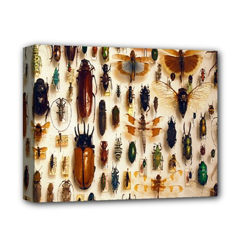 Insect Collection Deluxe Canvas 14  x 11
