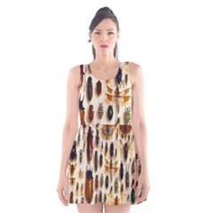 Insect Collection Scoop Neck Skater Dress
