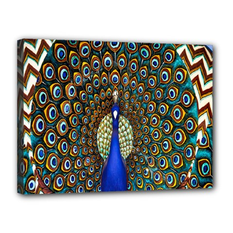 The Peacock Pattern Canvas 16  x 12