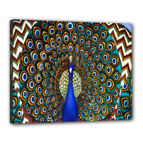 The Peacock Pattern Canvas 20  x 16