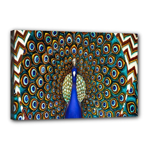 The Peacock Pattern Canvas 18  X 12