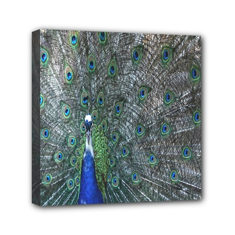 Peacock Four Spot Feather Bird Mini Canvas 6  x 6