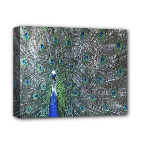 Peacock Four Spot Feather Bird Deluxe Canvas 14  X 11