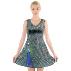 Peacock Four Spot Feather Bird V Neck Sleeveless Skater Dress