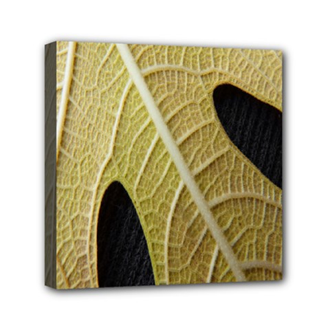 Yellow Leaf Fig Tree Texture Mini Canvas 6  x 6