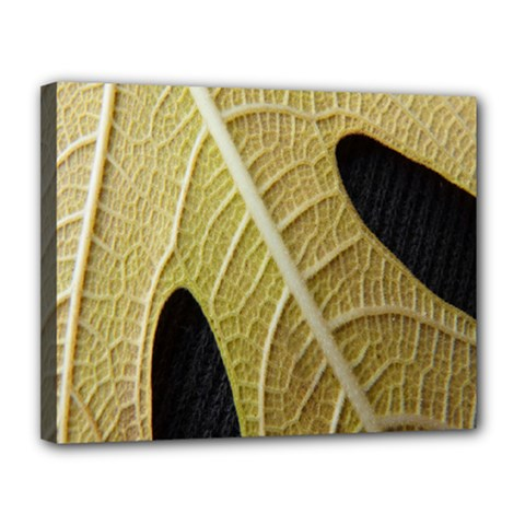 Yellow Leaf Fig Tree Texture Canvas 14  x 11