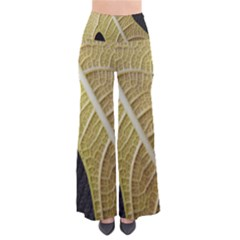Yellow Leaf Fig Tree Texture Pants