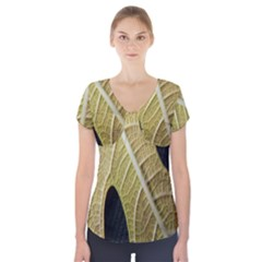 Yellow Leaf Fig Tree Texture Short Sleeve Front Detail Top