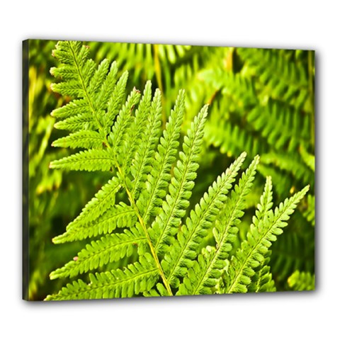 Fern Nature Green Plant Canvas 24  x 20