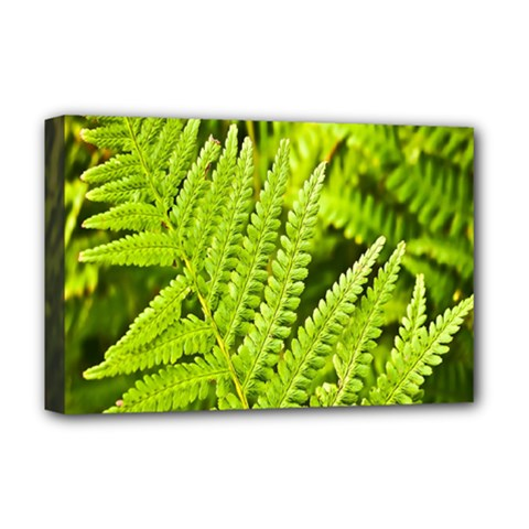 Fern Nature Green Plant Deluxe Canvas 18  x 12