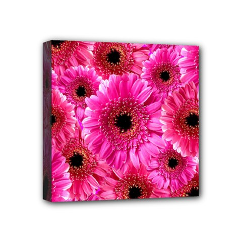 Gerbera Flower Nature Pink Blosso Mini Canvas 4  x 4