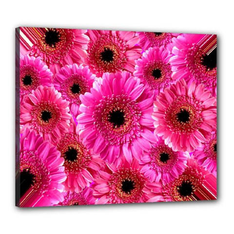 Gerbera Flower Nature Pink Blosso Canvas 24  x 20