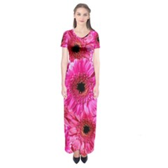 Gerbera Flower Nature Pink Blosso Short Sleeve Maxi Dress