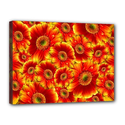 Gerbera Flowers Blossom Bloom Canvas 16  x 12