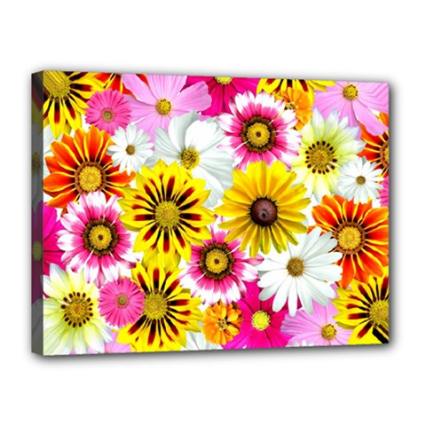 Flowers Blossom Bloom Nature Plant Canvas 16  x 12