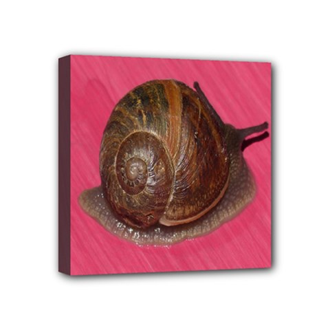 Snail Pink Background Mini Canvas 4  x 4