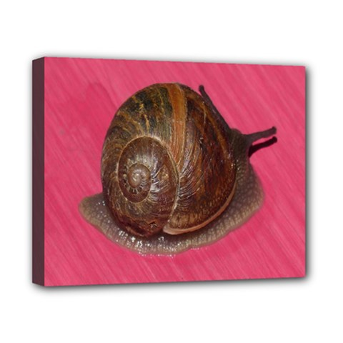 Snail Pink Background Canvas 10  x 8