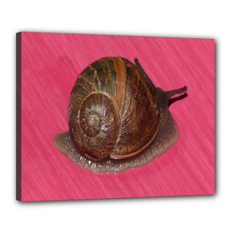 Snail Pink Background Canvas 20  x 16