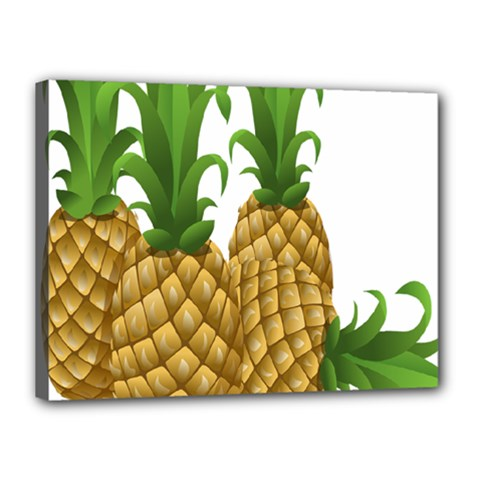 Pineapples Tropical Fruits Foods Canvas 16  x 12