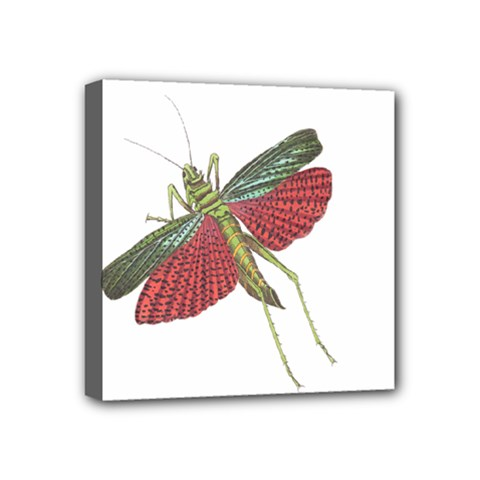 Grasshopper Insect Animal Isolated Mini Canvas 4  x 4