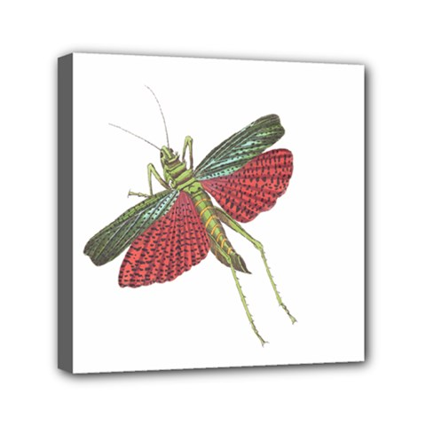 Grasshopper Insect Animal Isolated Mini Canvas 6  x 6