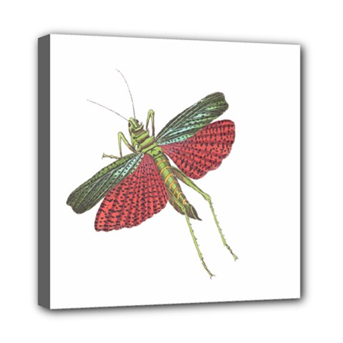 Grasshopper Insect Animal Isolated Mini Canvas 8  x 8
