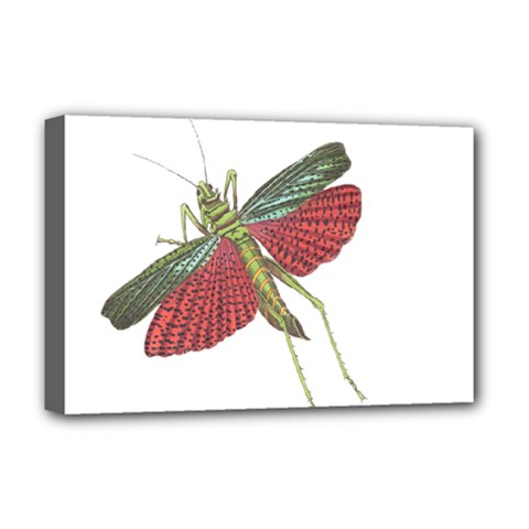 Grasshopper Insect Animal Isolated Deluxe Canvas 18  x 12