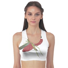 Grasshopper Insect Animal Isolated Sports Bra
