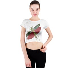 Grasshopper Insect Animal Isolated Crew Neck Crop Top