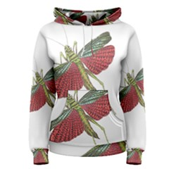 Grasshopper Insect Animal Isolated Women s Pullover Hoodie