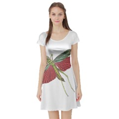 Grasshopper Insect Animal Isolated Short Sleeve Skater Dress