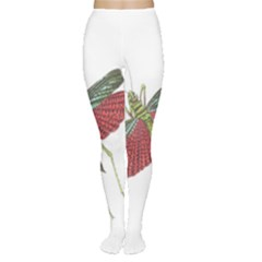 Grasshopper Insect Animal Isolated Women s Tights