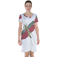 Grasshopper Insect Animal Isolated Short Sleeve Nightdress
