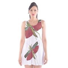 Grasshopper Insect Animal Isolated Scoop Neck Skater Dress