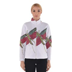 Grasshopper Insect Animal Isolated Winterwear