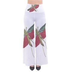 Grasshopper Insect Animal Isolated Pants