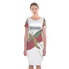 Grasshopper Insect Animal Isolated Classic Short Sleeve Midi Dress