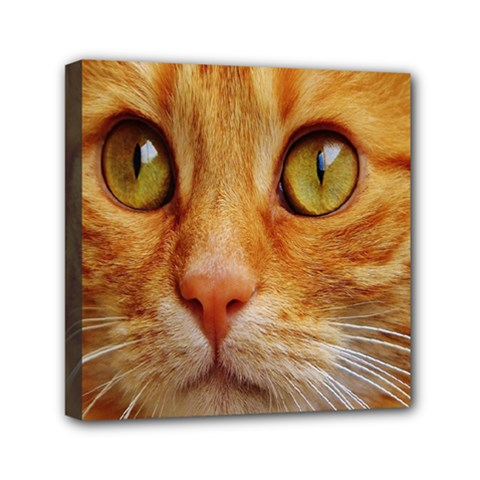 Cat Red Cute Mackerel Tiger Sweet Mini Canvas 6  x 6