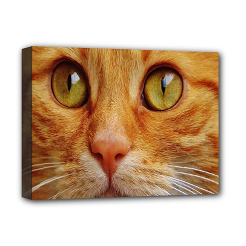 Cat Red Cute Mackerel Tiger Sweet Deluxe Canvas 16  x 12