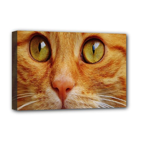 Cat Red Cute Mackerel Tiger Sweet Deluxe Canvas 18  x 12