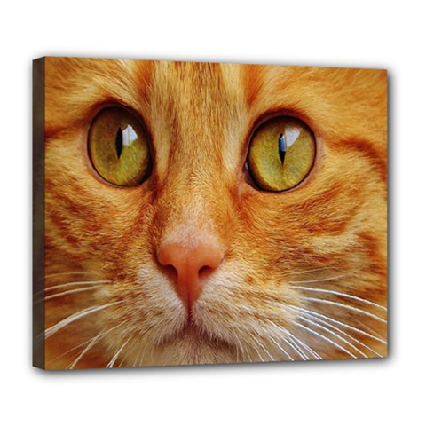 Cat Red Cute Mackerel Tiger Sweet Deluxe Canvas 24  x 20